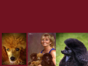 Primrose Poodles collage