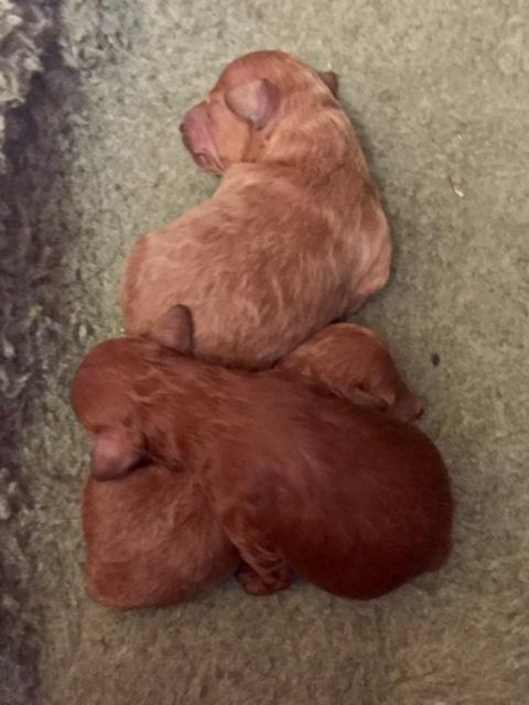 New Babies at 1 week old