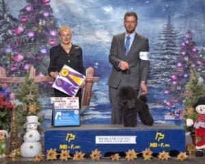 Primrose Poodles Champion