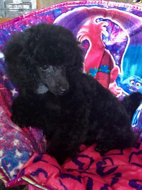 Black Toy Female