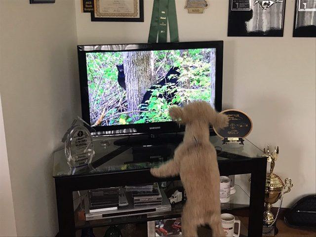 Primrose Poodles testimonial