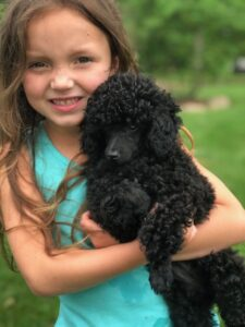 Primrose Poodles puppies