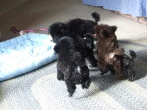 puppypage008_2